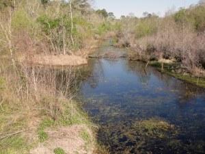 RG a natural bayou
